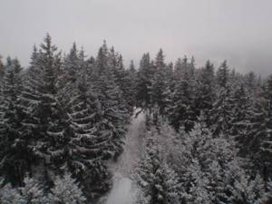 Thüringer Winterwald1