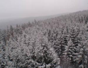 Thüringer Winterwald2