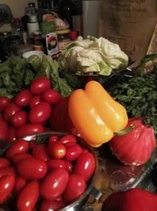 tomaten-bei-steffi