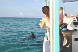 Delfine ums Boot