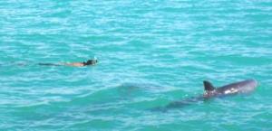 John mit Delfin
